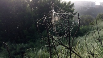 Early morning spider web