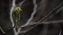 Moss on a twig