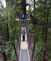 Tree Canopy Walk at Capilano Suspension Bridge Park