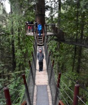 Tree Canopy Walk at Capilano Suspension Bridge Park