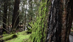 Moss in the rainforest