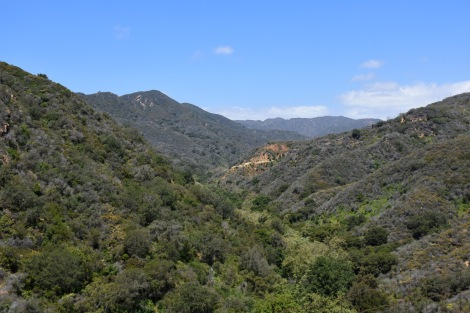 Looking Up Rustic Canyon