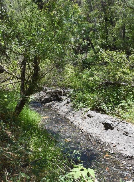 Rustic Creek