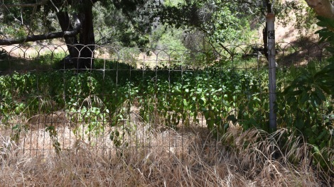 Abandon Garden - Murphy Ranch