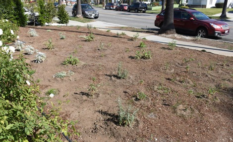 Newly planted native garden