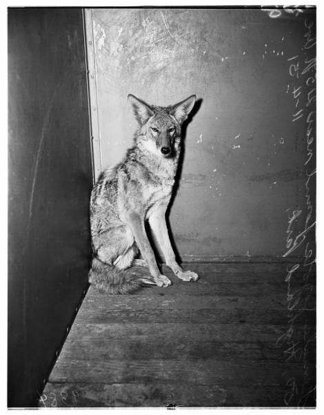 Ann_Street_Shelter_1951