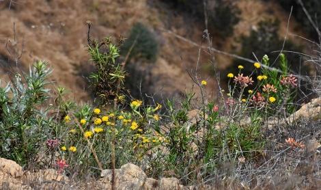 Flowering plants on side of Cahuenga Peak
