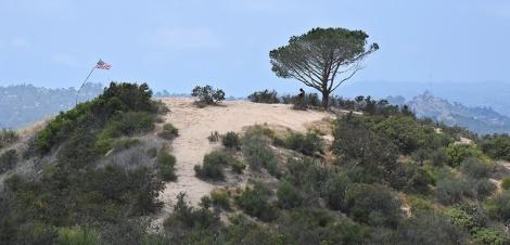 Wisdom Tree on Burbank Peak
