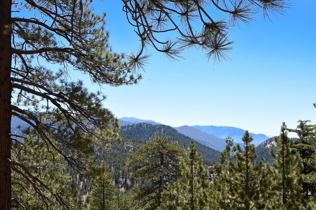 View from Winston Peak looking towards Mt. Baldy.  The nearest ridges would have burned in the Bobcat Fire.