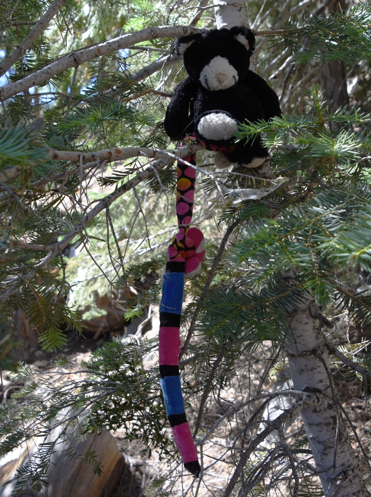 Stuffed bear and snake sit in a white silver fir tree on the Waterman Mountain trail