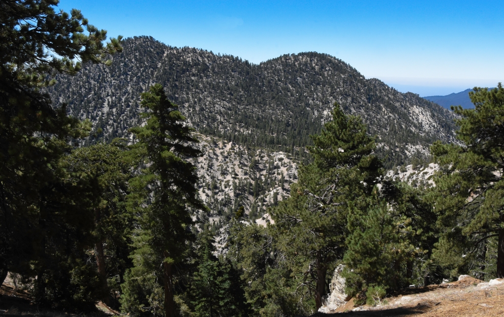 Twin Peaks seen for the Waterman Mountain trail in July 2020.  The Bobcat fire reached this summit before burning down its slope into Devil's Canyon and then up Waterman Mountain.