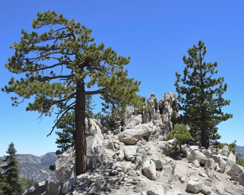 Crags and sugar pines near the summit of Waterman Mountain.
